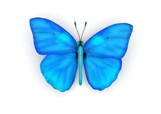 Blue Butterfly Isolated Royalty Free Stock Photos