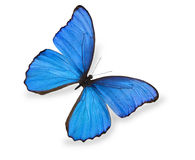 Blue butterfly isolated on white Royalty Free Stock Photo