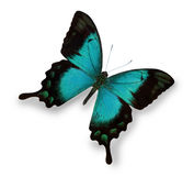 Blue butterfly isolated on white stock images