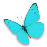 Blue butterfly. Isolated on white background Royalty Free Stock Photography