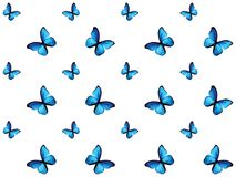 Blue butterfly isolated on white background. Colorful butterfly isolated on white background, blue wings insects flying. Pattern logo geometric. Bug polygonal vector illustration