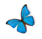 Blue butterfly isolated on white Stock Photography