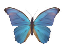 Blue Butterfly Isolated on White Realistic Vector Illustration Stock Photography