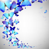 Blue butterfly. On a light background Stock Photos
