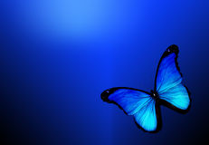 Blue butterfly onblue background Stock Photo