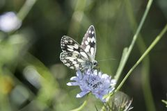 Butterfly Blue Sky Sun Nature Stock Photography