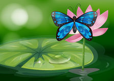 A blue butterfly and the pink flower at the pond Stock Photos