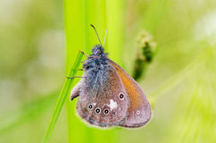 Blue butterfly sit on branch Stock Photos