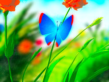 Blue butterfly sits on a stalk of the blooming poppy Royalty Free Stock Image