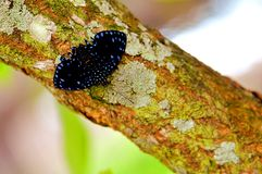 Blue butterfly on tree Royalty Free Stock Photos