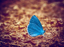 Blue butterfly vintage photo stock photos