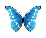 Blue butterfly on a white background Stock Photos