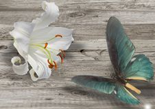 Blue butterfly and white lily Royalty Free Stock Image