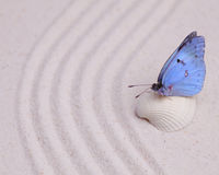 Blue butterfly on a white shell Royalty Free Stock Photography