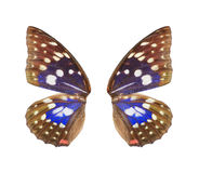 Blue butterfly wing royalty free stock images