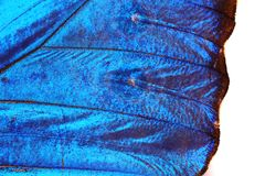 Blue Butterfly Wing Texture Stock Photography