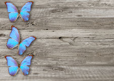 Blue butterfly on  wood background Royalty Free Stock Photos