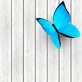 Blue butterfly on wood background Stock Photos