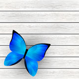 Blue butterfly on wood Royalty Free Stock Images