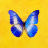 Blue butterfly on yellow Stock Photos