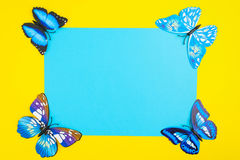 Blue butterfly on yellow background with blue paper with copy sp. Ace in center, top view Royalty Free Stock Photo