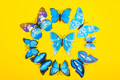 Blue butterfly on yellow background. Circle of blue butterfly on yellow background with copy space, top view Stock Image
