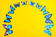 Blue butterfly on yellow background Royalty Free Stock Photo