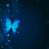 Blue butterflys Stock Images