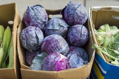 Blue cabbage is on the counter of the kiosk for sale. Russia royalty free stock image
