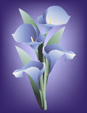 Blue Calla Lily. Is original artwork.  The vector file is in AI-EPS8 format Stock Photos