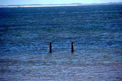 Blue calm Sea and two groynes are looking out stock photos