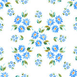 Blue cammomiles - watercolor drawing Royalty Free Stock Image