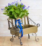 Blue campanula bouquet on wooden bench. Beautiful blue campanula bouquet with blue ribbon on wooden bench, on wood background Royalty Free Stock Photo