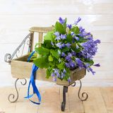 Blue campanula bouquet on wooden bench. Beautiful blue campanula bouquet with blue ribbon on wooden bench, on wood background royalty free stock photos