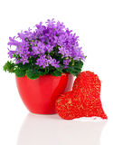 Blue campanula flowers for Valentine's Day with heart Stock Photos