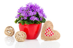 Blue campanula flowers for Valentine's Day with wooden heart Stock Photography