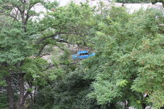Blue car hid behind the green trees in the city Royalty Free Stock Image