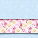 Blue card with pink and white roses. Vector eps-10. Blue card with pink and white English roses. Vector eps-10 stock illustration