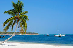 Blue Caribbean Coast Line. Stunning Blue Caribbean Coast with a swaying palm tree in the foreground and some boats in the bay Stock Photography