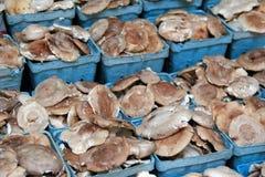 Blue cartons of Shitake Mushrooms Royalty Free Stock Photography