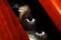 Blue cat eye. Details Royalty Free Stock Photography
