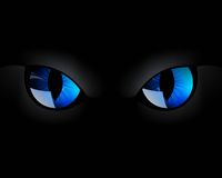 Blue Cat Eyes Royalty Free Stock Image