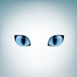 Blue cat eyes Royalty Free Stock Photos