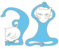 Blue cat yoga exercise Stock Image