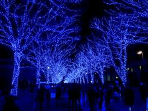 Blue cave, Tokyo stock image