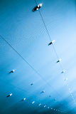 Blue ceiling Stock Image