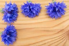 Blue Centaurea. Centaurea on tree Stock Photography