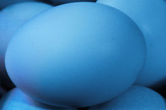 Blue chicken egg Royalty Free Stock Image