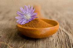 Blue chicory flower and full wooden spoon of powder Stock Photography