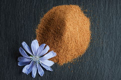 Blue chicory flower and powder of instant chicory Stock Image
